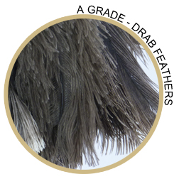 A Grade Quality Ostrich Feather Duster Feathers