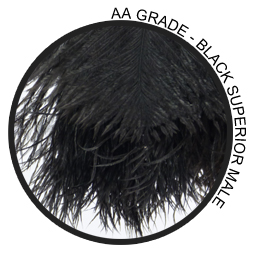 AA Grade Quality Ostrich Feather Duster Feathers