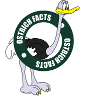 Interesting Ostrich Facts